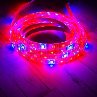 Светодиодная фито-лента 4:1 (Красный-синий) SMD 5050 60 led/m 12V IP65 (Влагозащищённая)